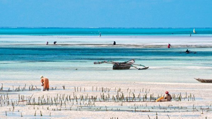 Offerta Zanzibar Gennaio Euro 1.490. Partenza 27 gennaio 2019 da Milano Malpensa.