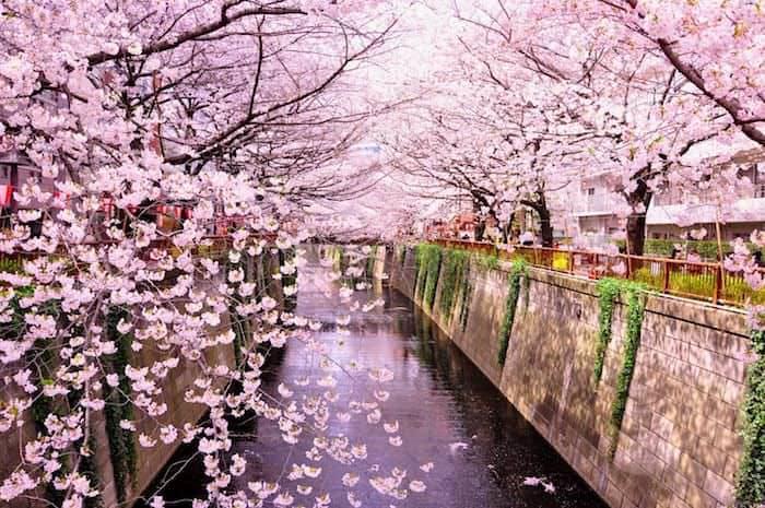 Incantevole Giappone